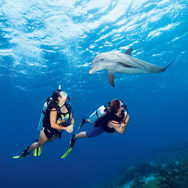 CUR06_2769_Dolphin_Divers-med_cc(1)